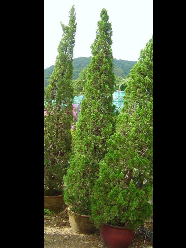 P020 1000 植物租售