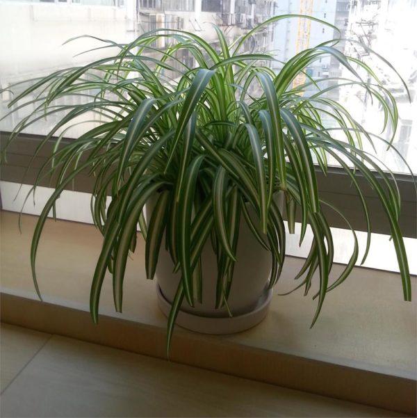 植物租售-P032