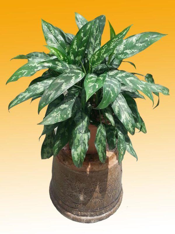 植物租售-P034