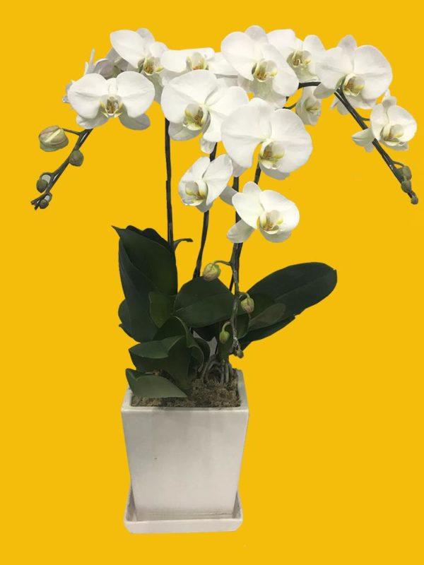 植物租售-P042